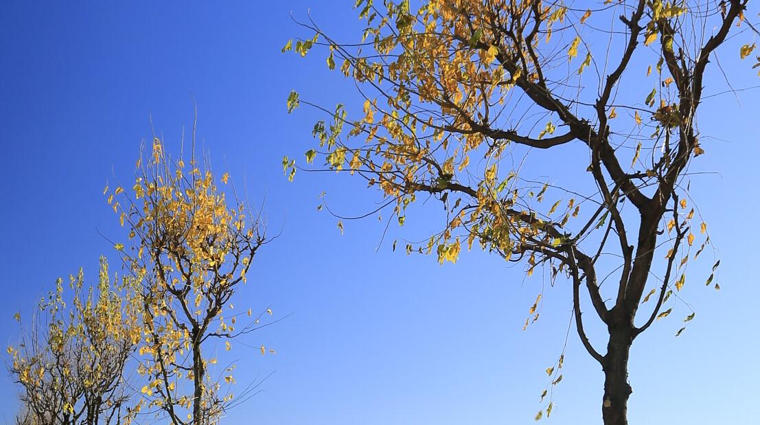 Cavalée i giardini della seta